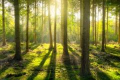 magic-forest